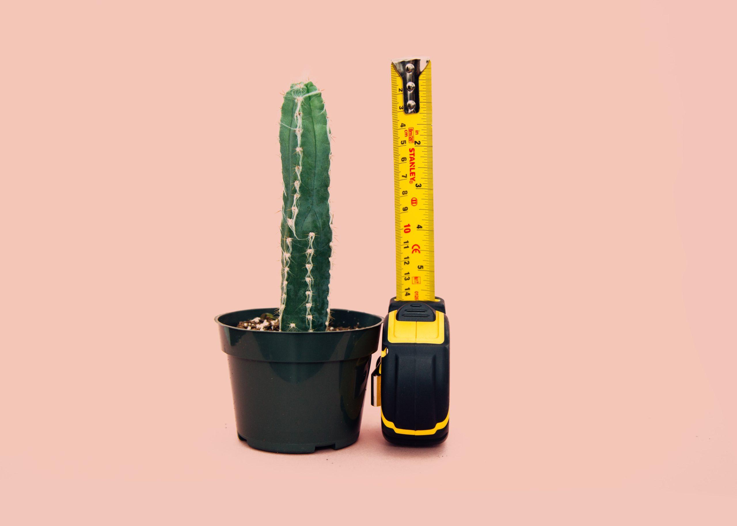 Kaktus wird gemessen